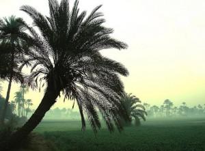 Campos junto al Nilo. Foto de Sesostris XXI.