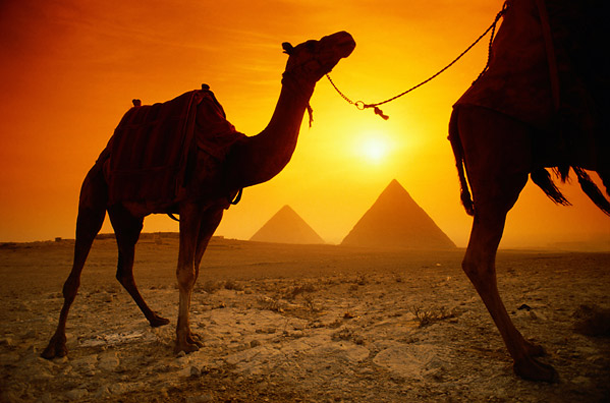 Camellos en el atardecer de Egipto